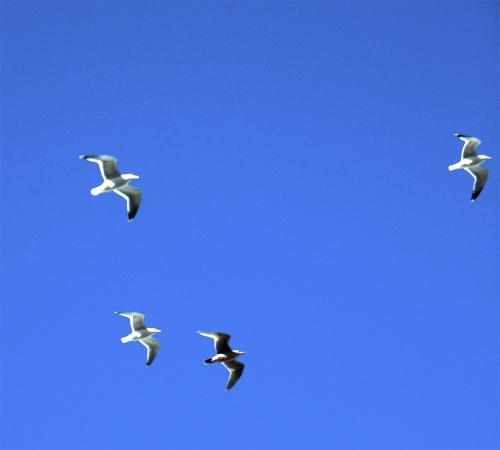 High Flyers © SR Euston