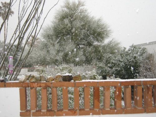 Palo Verde in Snow © AME