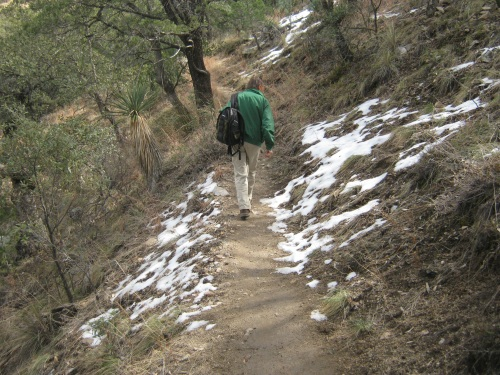 Naturalist on the Snowy Trail at Madera Canyon © AME