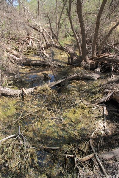 Willows, Cienega © SR Euston