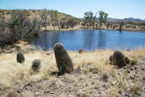 Cienega Pond © SR Euston