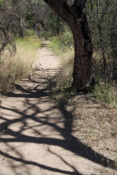 Along the Arivaca Creek Trail © SR Euston