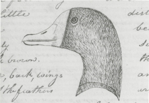 Brant Duck from the Journals Courtesy of the Missouri Historical Sociey