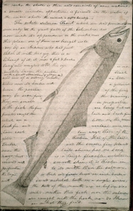 White Salmon Trout from the Journals courtesy of the American Philosophical Society