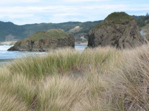 Beach Grass © AME