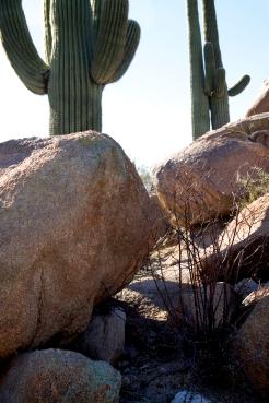 Saguaro NP West © SR Euston