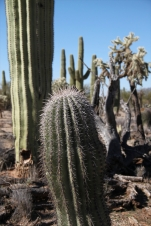 Saguaro NP East © SR Euston