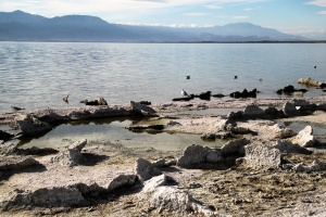 Shoreline, Salton Sea © AME